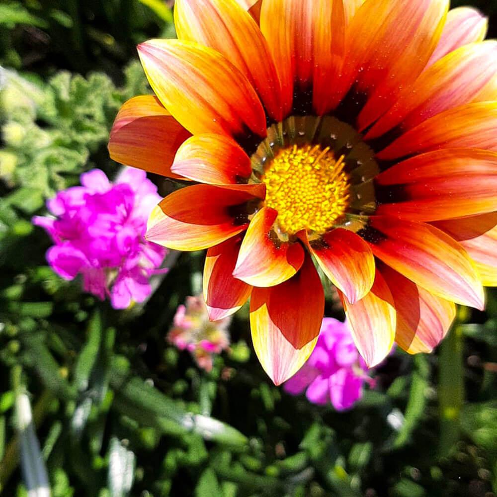 Flores bonitas e coloridas