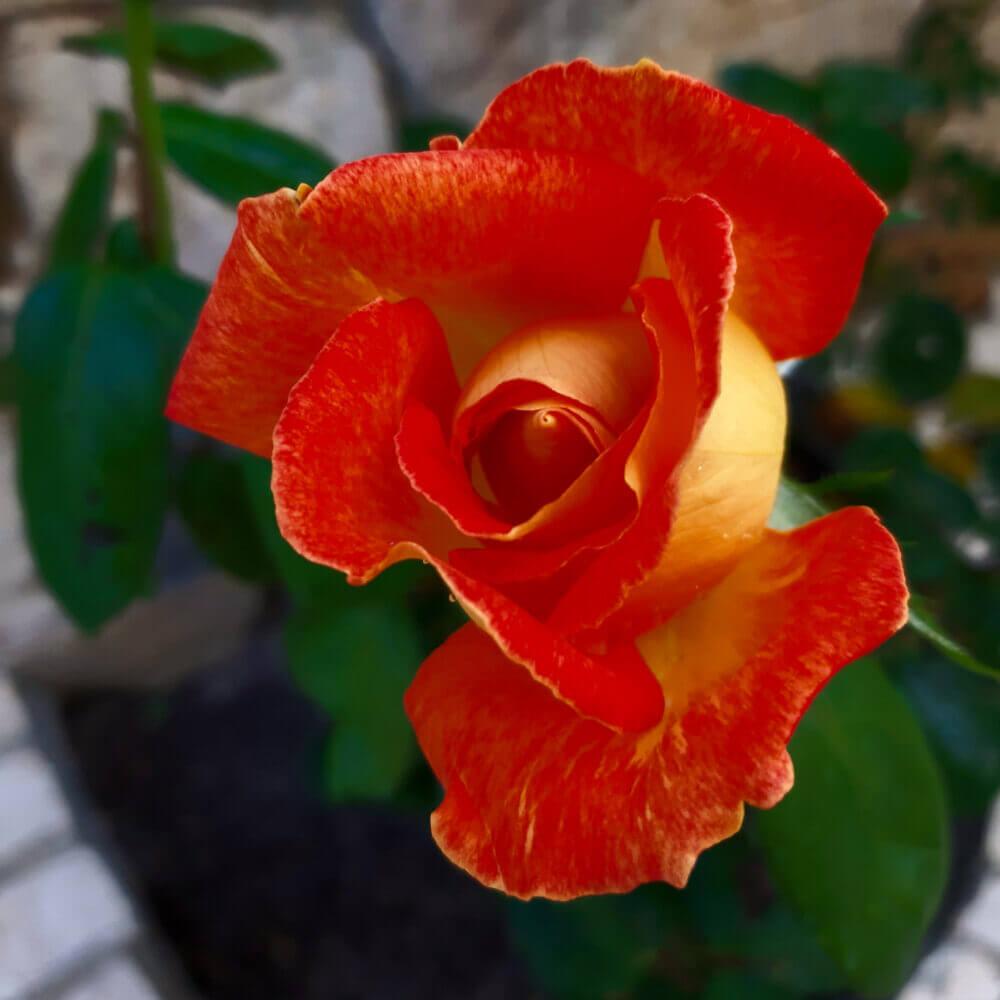 Deixe-se encantar com as cores do nosso jardim