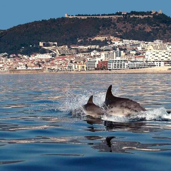 Passagem de golfinhos ao largo da baía de Sesimbra